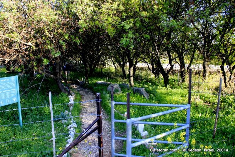Tel Kedesh, Cades, Ramat Naftali, Naftali, Upper Galilee 032