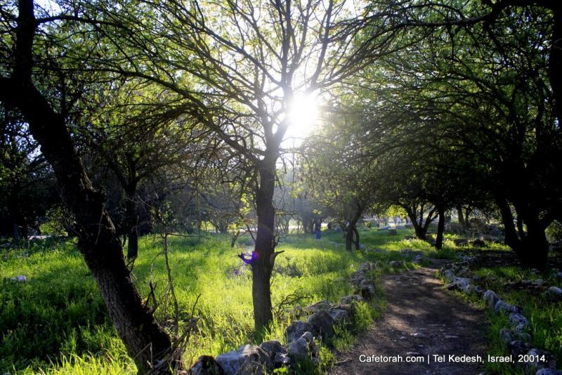 Tel Kedesh, Cades, Ramat Naftali, Naftali, Upper Galilee 045