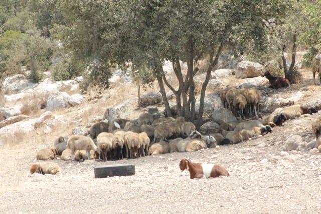 Beit-Shemesh, Adulam, Oved-Edom 257