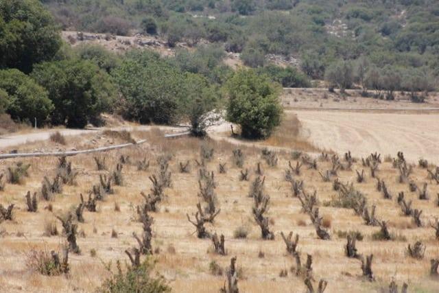 Beit-Shemesh, Adulam, Oved-Edom 273
