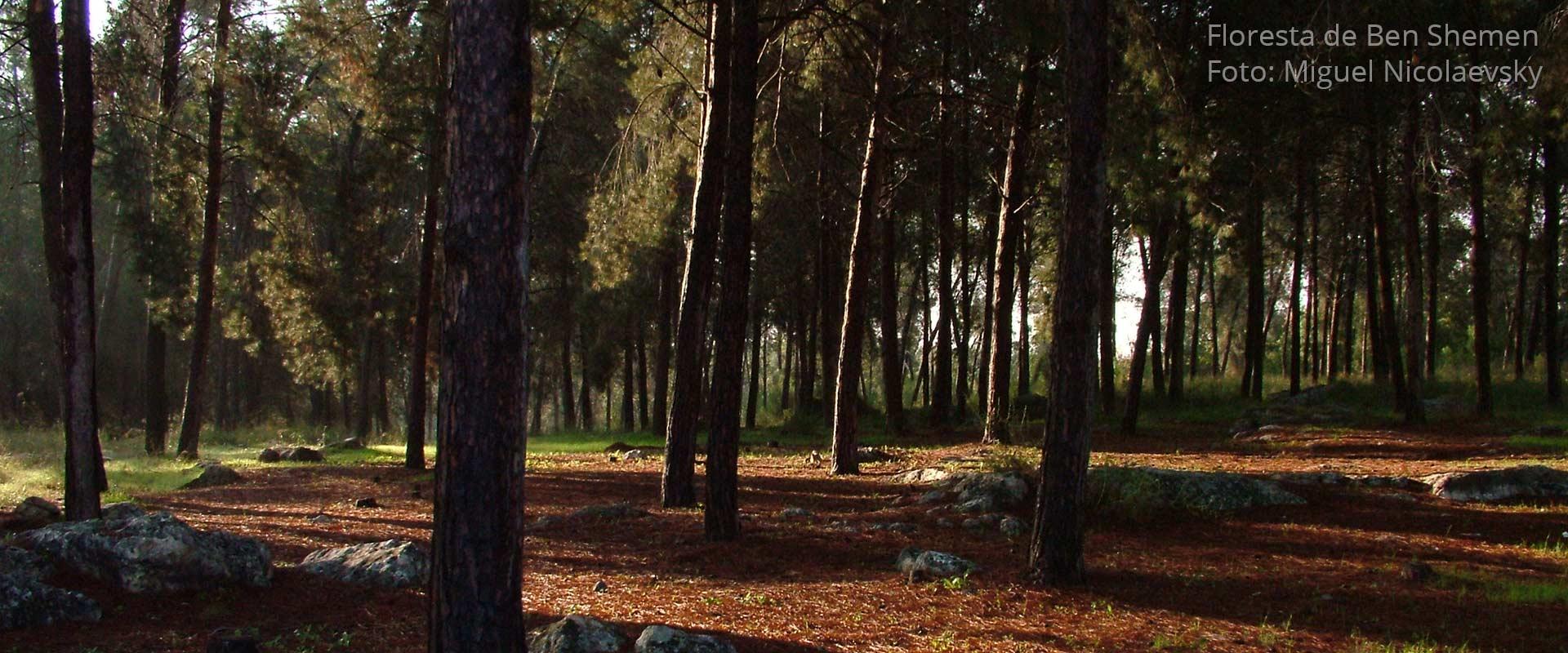floresta-de-ben-shemen