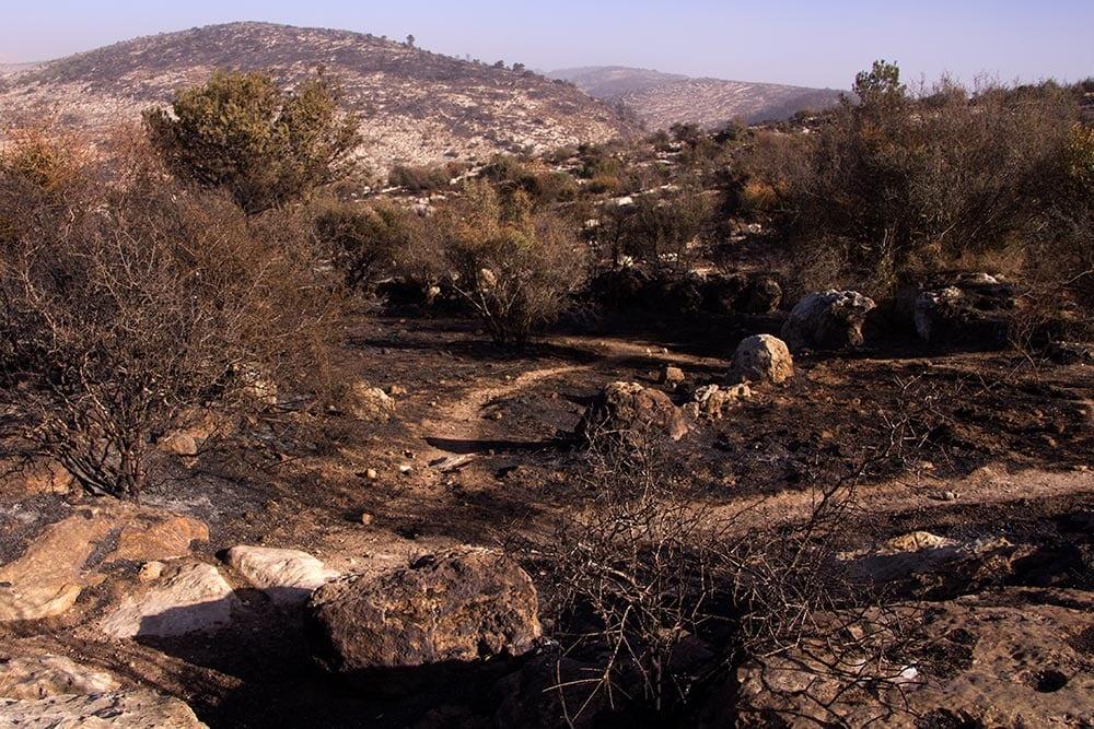 Incêndios em ISRAEL