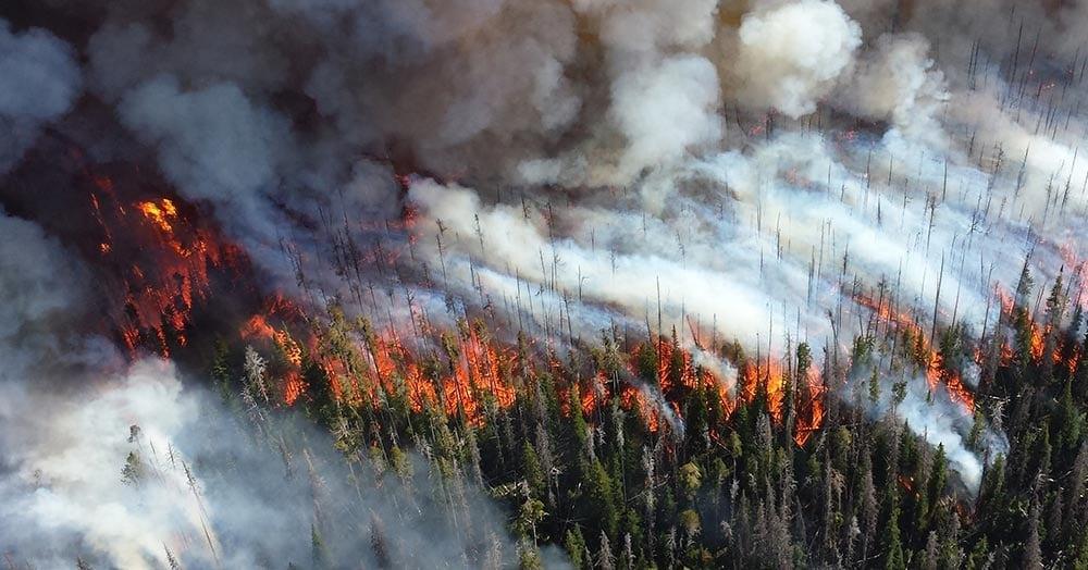 incendio-em-floresta
